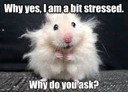 Image result for don't get stressed